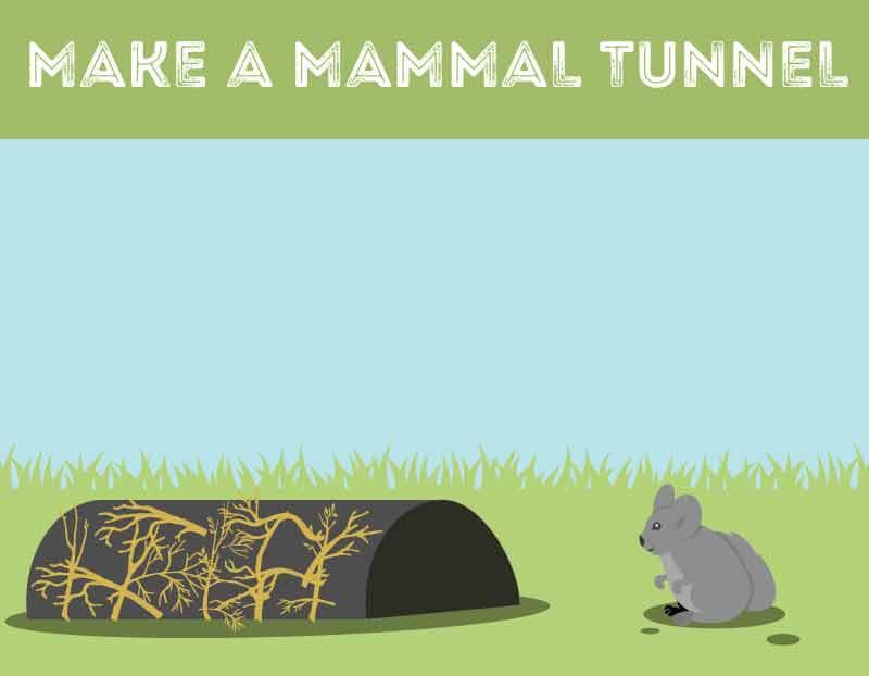build-mammal-tunnel