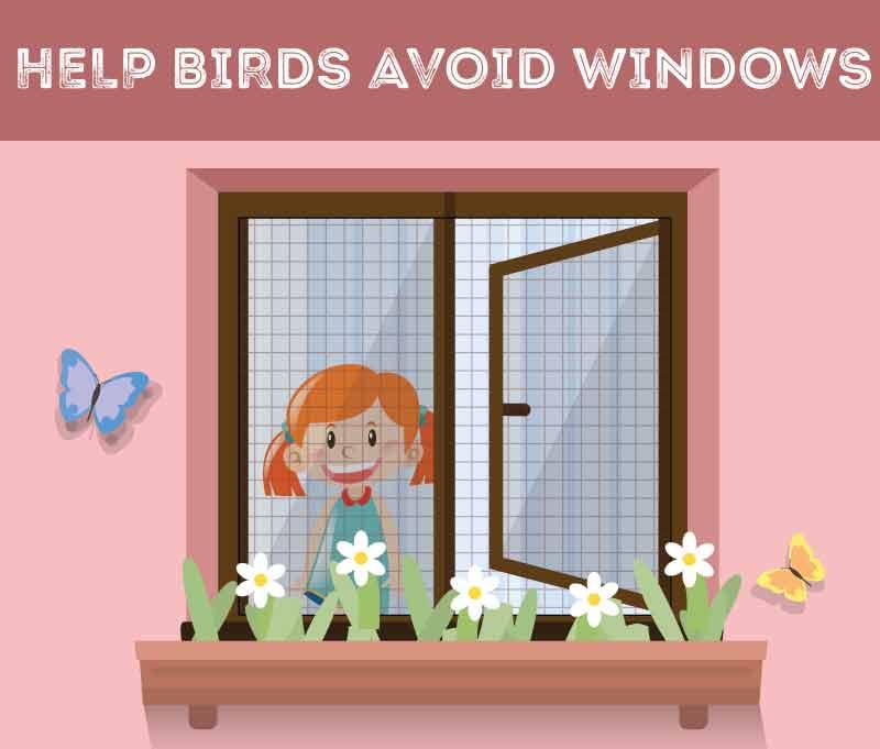 help-birds-avoid-windows