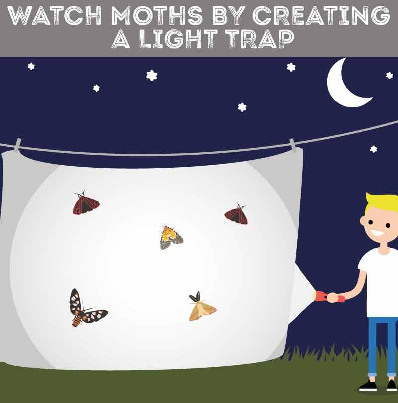 watch-moths-building-a-light-trap
